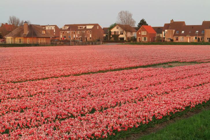 destination focus...Noordwijk_3_728x485